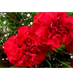 Cravo Flor 3087
