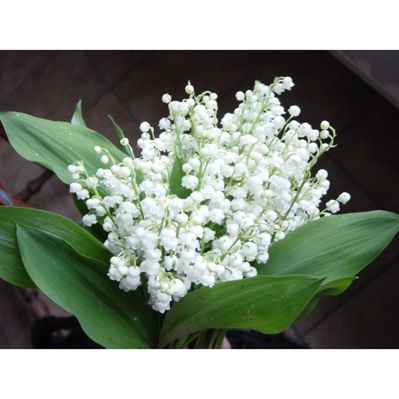 Aceites esenciales esencias de flores y plantas for Porte in english